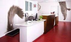 Resultado de imagen para veterinary design