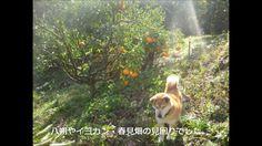 「海と犬 ~ ハナの追悼曲 ~」   演奏 ジャパンホイッスルD管