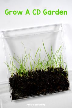 This easy upcycling idea is green, really, it's green grass! Teach children about grass and planting.