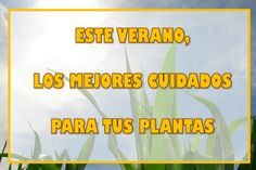 Sigue nuestros consejos para mantener las plantas y flores de tu jardín en el verano Herbs, Ideas, Plant Decor, Tips, Summer Time, Plants, Flowers, Herb, Thoughts