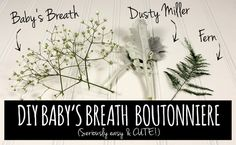 Easy DIY Babys Breath Boutonniere Tutorial. Materials: 3 tiny pieces of baby's breath (this is only about ¼ of 1 stem of baby's breath) 1 or 2 pieces of dusty miller (this is also only a fraction of 1 stem of dusty miller) 1 piece of fern (or any kind of similar greenery) floral tape lace (or hemp) boutonniere pins scissors. get the full step by step here: http://www.confettidaydreams.com/easy-diy-babys-breath-boutonniere/
