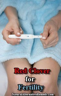 Red Clover for Fertility | Natural Alternative Remedy infertility #infertility #baby