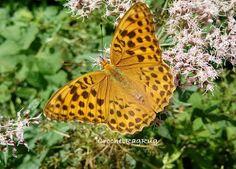 Support for Smallbiz : Schmetterling
