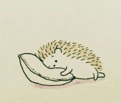 So soft and comfy, falling asleep now .zzzzzz So soft and comfy, falling asleep now . Hedgehog Art, Hedgehog Drawing, Cute Hedgehog, Hedgehog Illustration, Cute Illustration, Illustrator, Cute Doodles, Easy Drawings, Animal Drawings