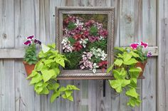 Gotta try this . . . a framed flowerbox!