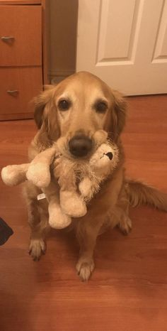 Dogs are just awesome man ( Abby- my 5 year old golden retriever) https://i.redd.it/fhkmhzy9us501.jpg
