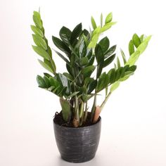 Check out our list of 14 low-light-loving houseplants you can grown indoors, from the experts at HGTV.