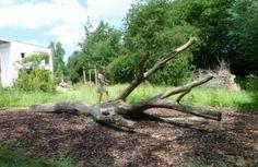 Liggende klimboom - Speelnatuur