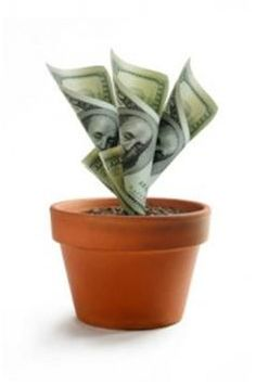 Seed Your Site to Grow Success