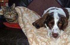 .....so, she stole my rug