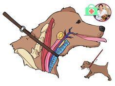 Nichtsdestotrotz, das Ziehen oder ruckartige Vorspringen des Hundes an der Leine sollte so oder so vermieden werden.
