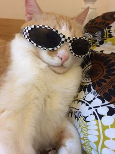 Khan cats with shades. funny cats, cute animals и animals I Love Cats, Crazy Cats, Cool Cats, Baby Animals, Funny Animals, Cute Animals, Kittens Cutest, Cats And Kittens, Cat Sunglasses