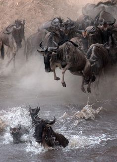 A large migration of Wildebeest by Sergey Agapov on 500px