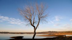 Leere Brunnen, tote Bäume: Kalifornien vertrocknet