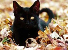 love black cats! cats