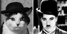 16 Katzen, die als etwas völlig Anderes aussehen. Das Foto Nummer 5 ist ein echtes Meisterstück!