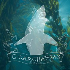 aquariumjazz a+d — In honour of shark week, a few of my favourites....