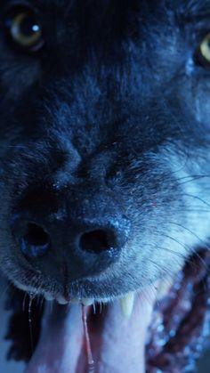 AE_WolfBathMat_Android -   - #AEWolfBathMatAndroid #android #DogLovers #DogsandPuppies #wolfbathmat