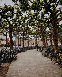 Gent Belgium  ______________________________________________________ #sapoviagens #gent #visitgent #topbelgiumphoto