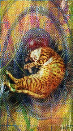 Belchior, o gato!