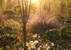 Hunting Brook Garden. Pic credit: Jimi Blake