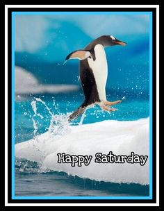 Image result for happy saturday ocean animal pics