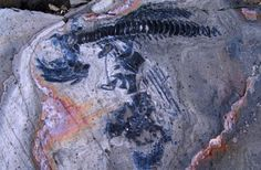 'Fish Lizard' Graveyard Discovered Under Melting Glacier MAY 29, 2014 // BY TANYA LEWIS, LIVESCIENCE : Discovery News One of the 46 ichthyosaur fossils discovered near a glacier in southern Chile. WOLFGANG STINNESBECK-Dozens of nearly complete skeletons of prehistoric marine reptiles have been uncovered near a melting glacier in southern Chile.