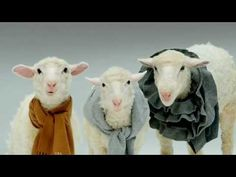 holiday miracl, jingle bells with sheep, youtube, holidays, jingl bell, lamb, christmas carol, music must haves, music videos for kids