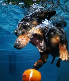 hahaha this is what my older dog used to do when she dove for her toys in the pool