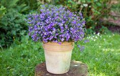 Schädlinge : Blumen gegen Schneckenplage - Nutzgarten - DAS HAUS