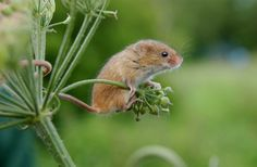 last time I was at the Philly zoo, I spent more than an hour looking at 2 harvest mice.....