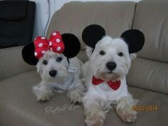 Mickey and Minnie westies.....what a great pair!!!