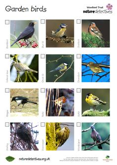 Bird spotter sheets A very helpful checklist and images of common British birds. See how many your class can spot. Common British Birds, Common Birds, Forest School Activities, Nature Activities, Montessori Activities, Nature Hunt, Nature Study, Outdoor Education, Outdoor Learning