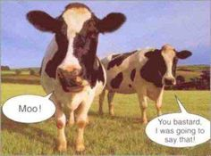 Top 36 Most Funniest Cow Quotes Bad Memes, Funny Memes, Jokes, Hilarious, Funny Cow Pictures, Cow Meme, Cow Quotes, Life Quotes, Cow Tipping
