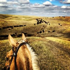 Horseback riding in the middle of nowhere All The Pretty Horses, Beautiful Horses, Horse Ears, Ranch Life, Happy Trails, Trail Riding, Horse Photography, Horse Love, The Ranch