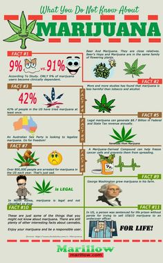 What You Do Not Know About Marijuana Infographic