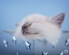 Faith - This little kitten's dreams dance among the stars.  by Rachael Hale