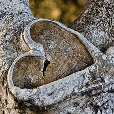 Finding beauty in nature. Love this heart in tree!!