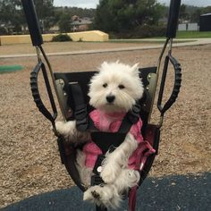 What a chilly morning walk to the parkYesterday Melbourne's weather reached over 30 degrees and today feels like winter again! #crazyweather by emma_the_westie