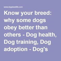 Know your breed: why some dogs obey better than others - Dog health, Dog training, Dog adoption - Dog's Best Life
