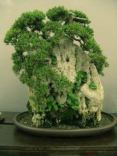 bonsai by idb