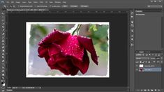 Add Copyright Data in Photoshop Automatically