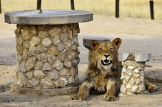 Provinces Of South Africa, Picnic Spot, Tiger, Travel Photographer, Wildlife Photography, Lions, Safari, Ebooks, Park