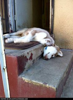Dog sleeping on steps.