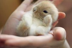 Baby bunny. He is so CUTE!!