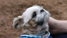 Little dog Blu is transformed thanks to rescuers and a very loving family.