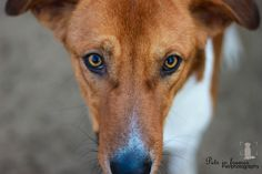 #Carfour #Egyptian dog #pet photography #Egypt #pets in frames