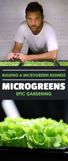 Hydroponics Gardening Learn how I started a microgreens business in my garage on a total whim. It's not smoke and mirrors.just solid, practical advice for starting out! Aquaponics System, Hydroponic Farming, Hydroponic Growing, Hydroponics, Backyard Aquaponics, Aquaponics Plants, Vertical Vegetable Gardens, Indoor Vegetable Gardening, Home Vegetable Garden