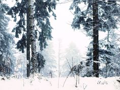 winter trees by Karo Solo  #winter #snow #forest #nature #trees #picyou #mountains #photography