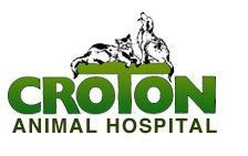 Westchester veterinarians can provide a referral for adjunct advanced care. www.crotonanimalhospital.com